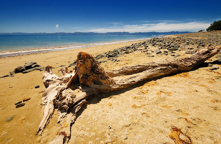Ocean Wood